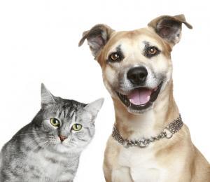 Evcil Dostlarımız