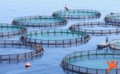 Balık Çiftlikleri Hakkındaki 9 Korkunç Gerçek!