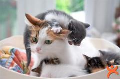 Anneliği Yaşayan Evcil Dostlarımız