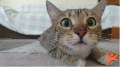 Kediler Hakkında Muhtemelen Bilmediğiniz 20 Şaşırtıcı Gerçek