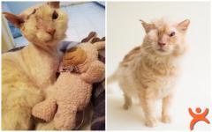 Yüzüne Asit Dökülen Zavallı Kedi