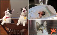 İlklerle Tanıştıklarında Komik Tepkiler Veren Hayvanlar
