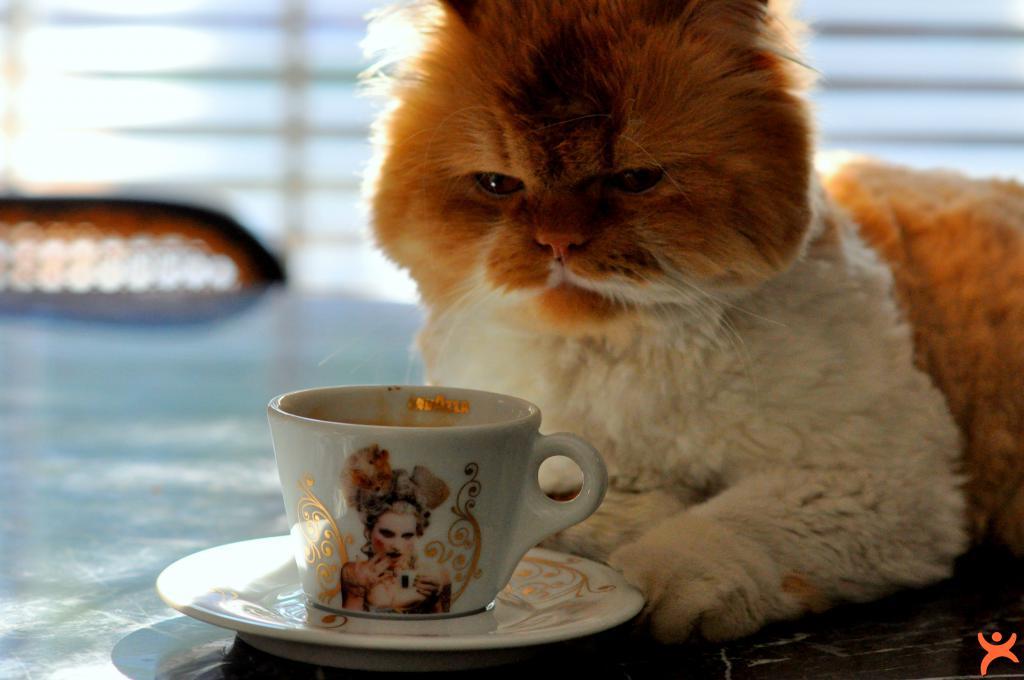 Aç Karnına Kahve İçmeyin!